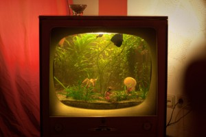 TV set fishbowl