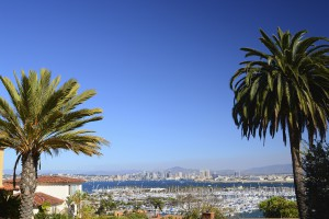 San Diego skyline and bay view framed with palm trees