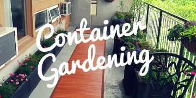 container garden blog image