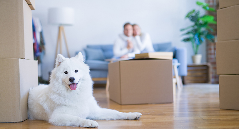Couple with dog sitting on the sofa at new home around cardboard boxes